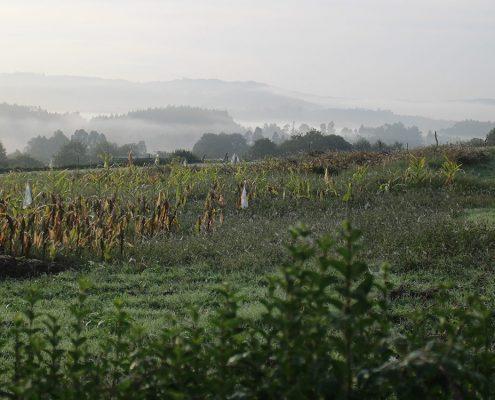 Camino Inglés - beautiful landscapes